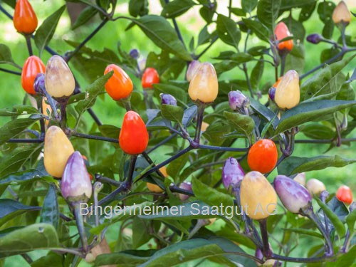 eda7381fd3e7e Bio-Saatgut und Jungpflanzen